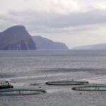 Brev til Lea Wermelin omkring akvakultur