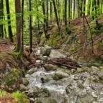 Høringssvar om arbejdsprogram for vandområdeplaner 2021 - 27
