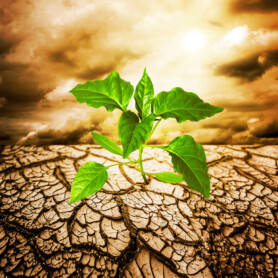 Ny rapport sætter bioøkonomien på landkortet