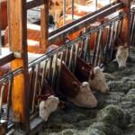 Høringssvar til ordningen om modernisering af kvægstalde