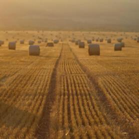 DMT i Altinget: Klimaforhandlinger om landbrug og transport bør sikre en strategi for en bæredygtig bioøkonomi og miljøkrav, der reducerer ammoniakudledningen