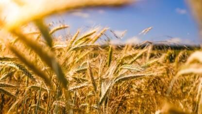 DMT kommentar vedr. klimaforhandlingerne på landbrugsområdet